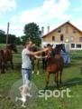 Pensiunea Cabana 3 Stejari - echitatie in Rupea | faSport.ro