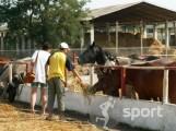 Herghelia Mangalia - echitatie in Mangalia | faSport.ro