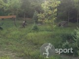 SIEGE paintball - paintball in Galati | faSport.ro